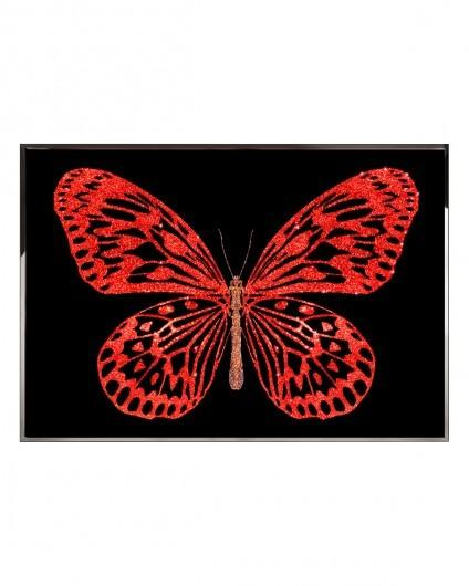 Visionnaire Redbutterfly