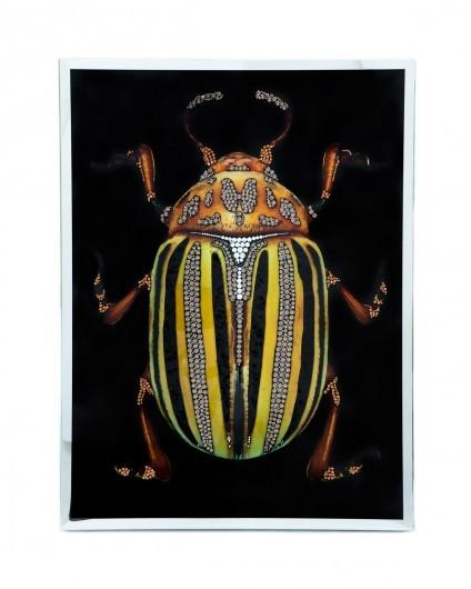 Visionnaire Scarabeo 3